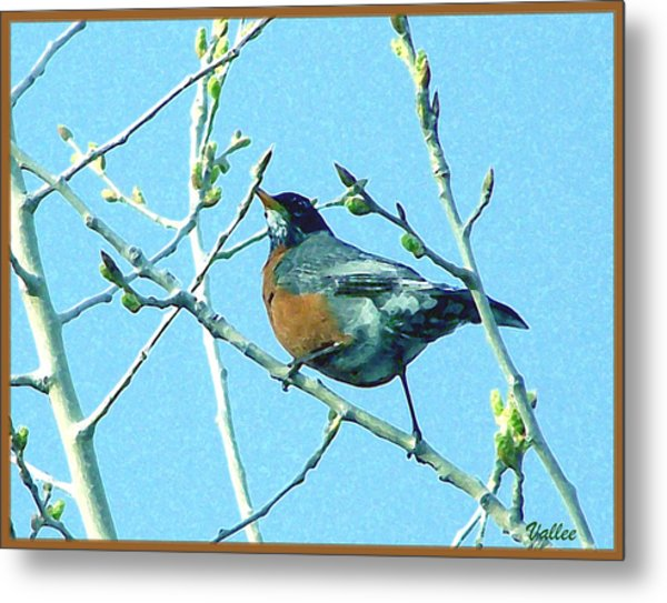 Signs Of Spring Metal Print by Vallee Johnson