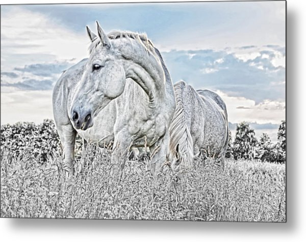 Silent White Summer Metal Print