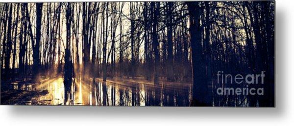 Silent Woods No 4 Metal Print