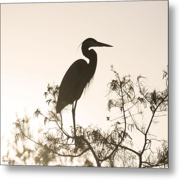 Silhouette In The Sunset Metal Print