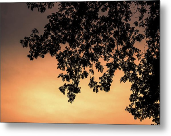 Silhouette Tree In The Dawn Sky Metal Print