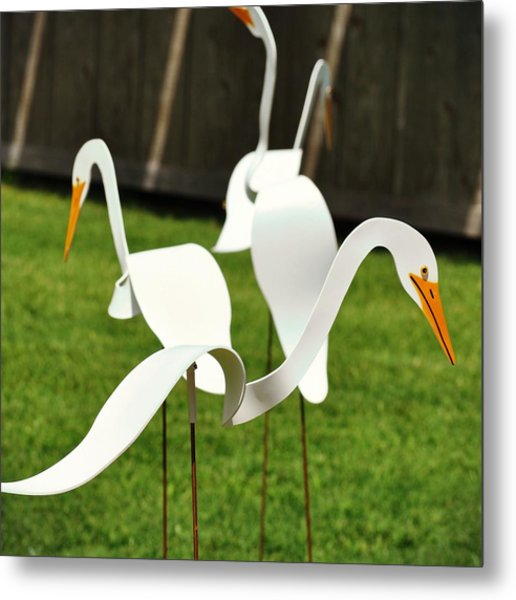 Silly Goose Metal Print by JAMART Photography