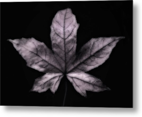 Silver Leaf Metal Print by Artecco Fine Art Photography