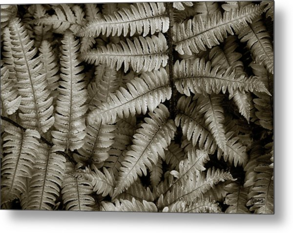 Silvery Ferns Metal Print