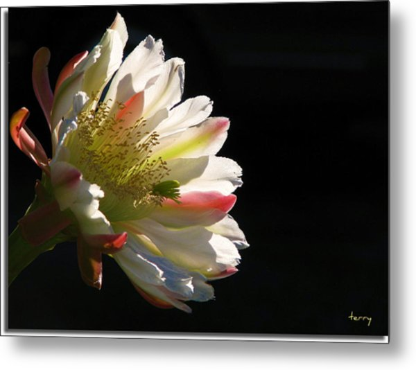 Simple Splendor Metal Print