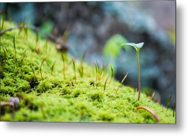Simple Sprout Metal Print
