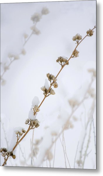 Simplicity Of Winter Metal Print
