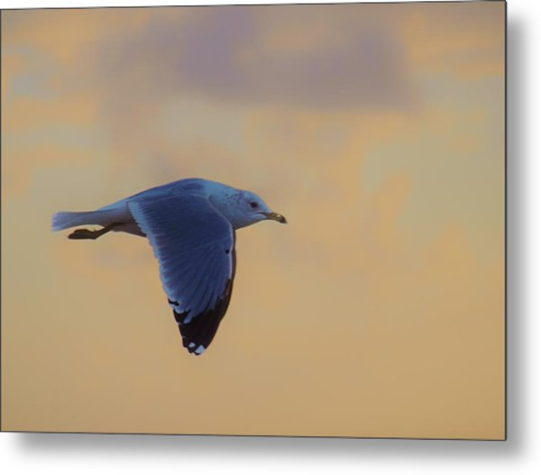 Simply Flying Metal Print
