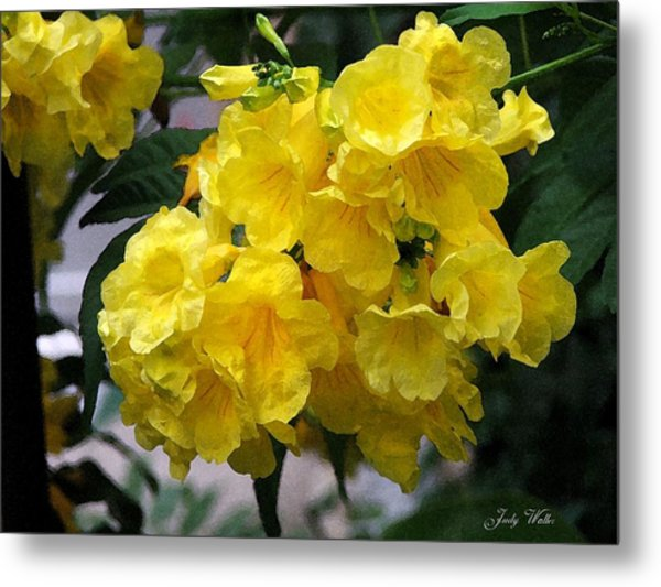 Simply Yellow Metal Print by Judy  Waller