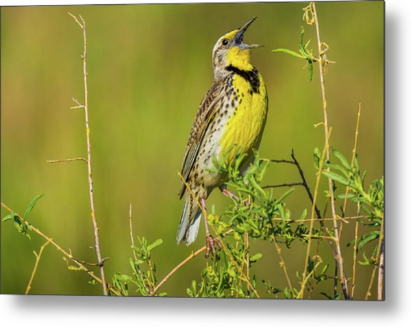 Sing A New Song Metal Print