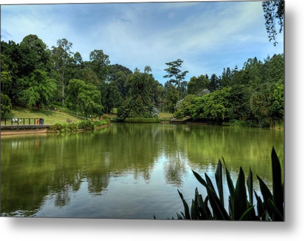 Singapore Botanical Gardens Metal Print