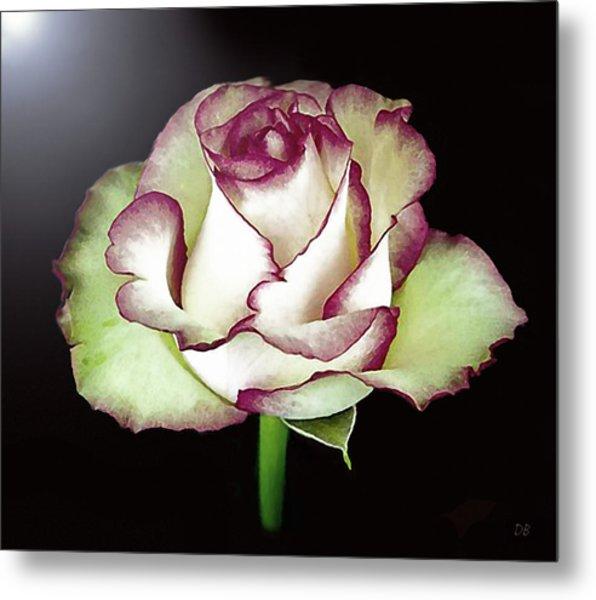 Single Beautiful Rose Metal Print
