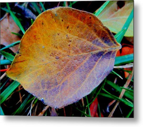 Single Brown Leaf Metal Print by Beth Akerman
