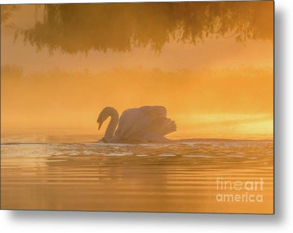 Single Mute Swan - Cygnus Olor - On Orange Golden Pond At Sunrise Metal Print