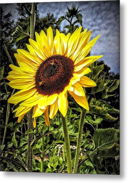 Single Sunflower Metal Print