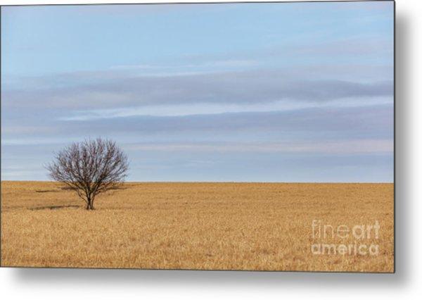 Single Tree In Large Field With Cloudy Skies Metal Print