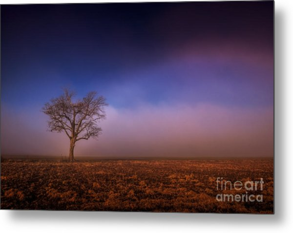 Single Tree In The Mississippi Delta Metal Print