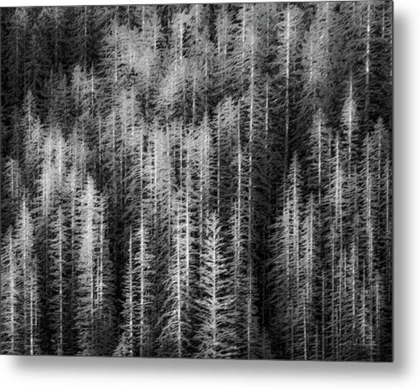 Sitka Abstraction Metal Print