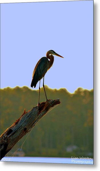 Metal Print featuring the photograph Sitting High On The Log by Lisa Wooten