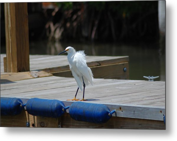 Sitting On The Dock Of The Bay Metal Print by Clay Peters Photography
