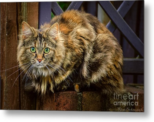 Sitting Pretty Metal Print