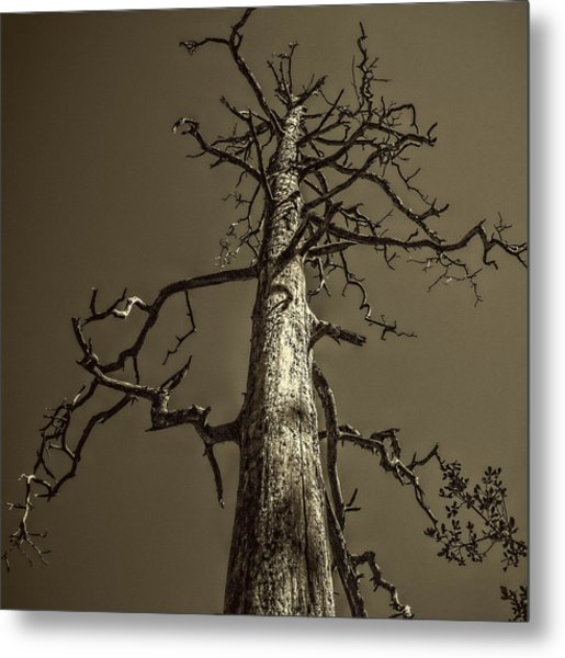 Skeletal Tree Sedona Arizona Metal Print