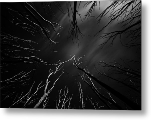 Skeleton Trees Metal Print