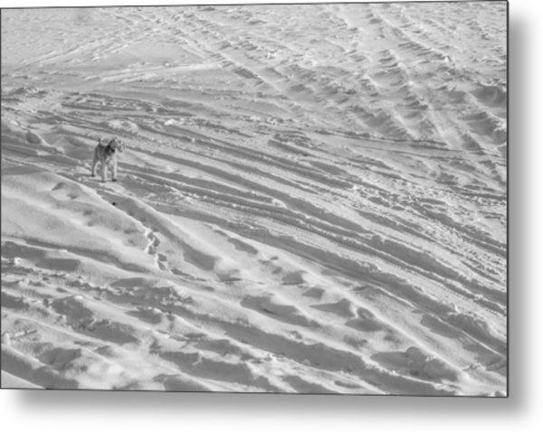 Ski Dog Metal Print by Gunther Schabestiel