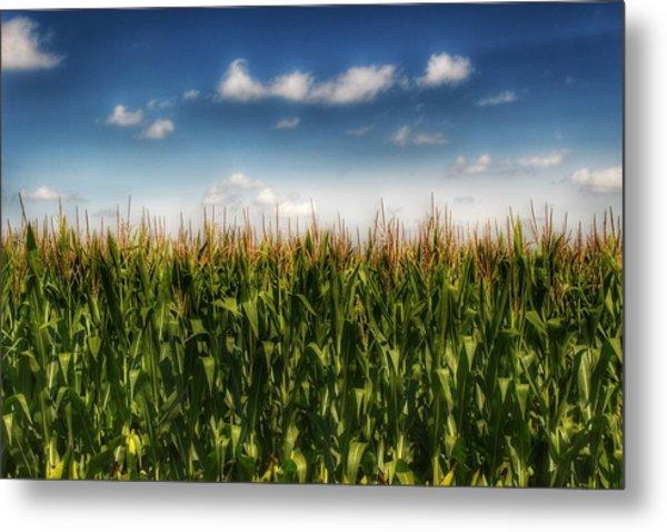 2005 - Sky High Corn Metal Print