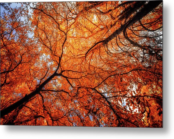 Sky Roots In Forest Red Metal Print