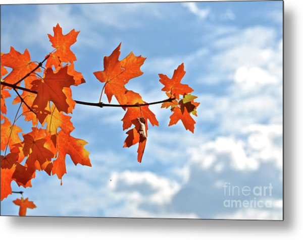 Sky View With Autumn Maple Leaves Metal Print