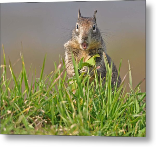 Slack-jawed Squirrel Metal Print