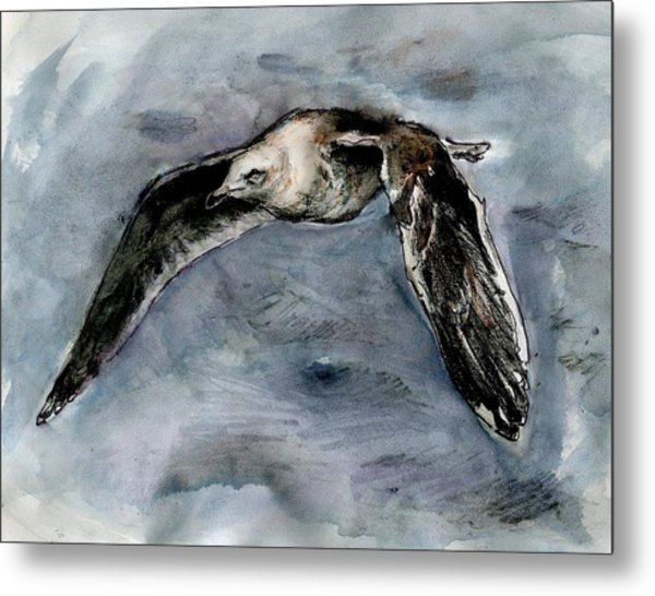Slaty-backed Gull Metal Print