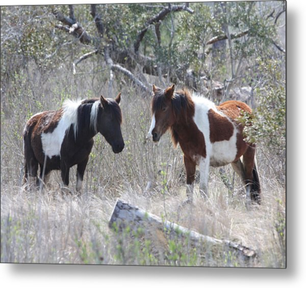 Sleeping Beauties Metal Print