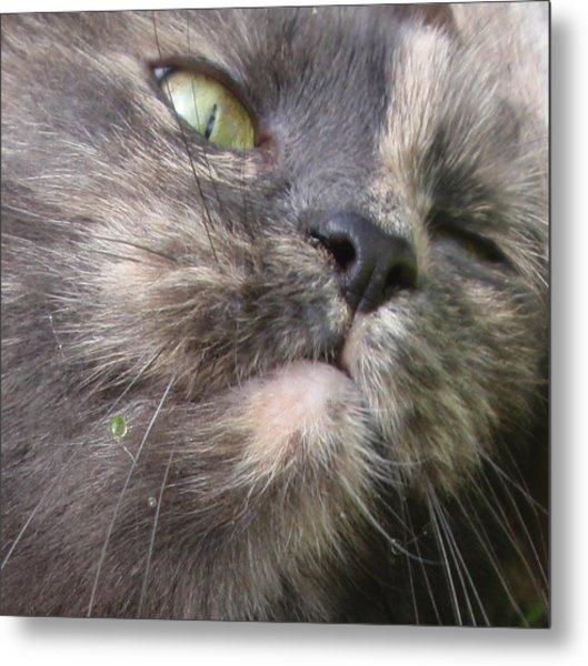 Sleeping Cat Portrait Metal Print by Valia Bradshaw