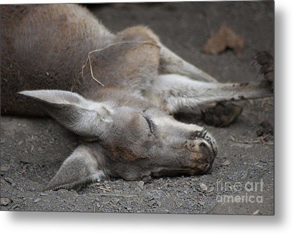Sleeping Joey 20120714_65a Metal Print