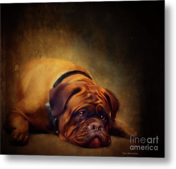 Sleepy Dog Metal Print
