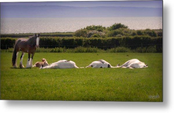 Sleepy Gypsy Afternoon By The Water Metal Print by Elizabeth Sescilla