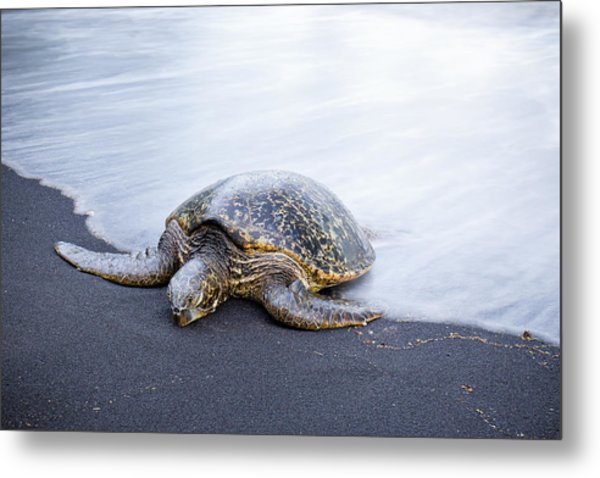 Sleepy Honu Metal Print