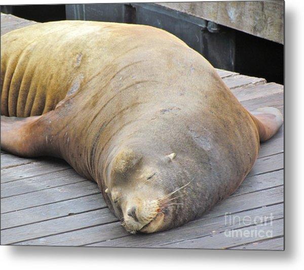 Sleepy Sea Lion Metal Print