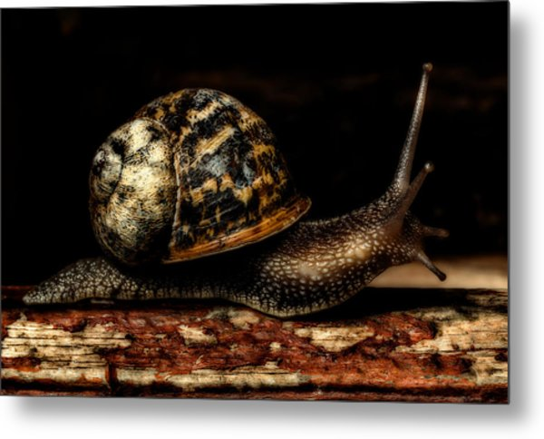 Slow Mover Metal Print