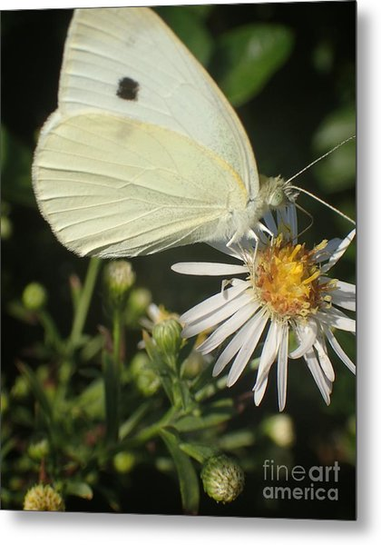 Sm Butterfly Rest Stop Metal Print