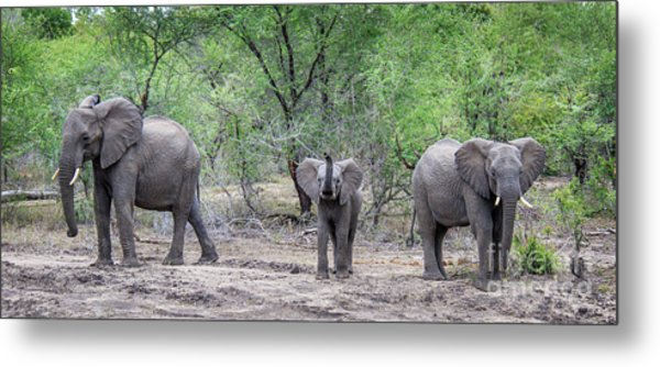 Small Ellie In The Middle Metal Print by Jennifer Ludlum