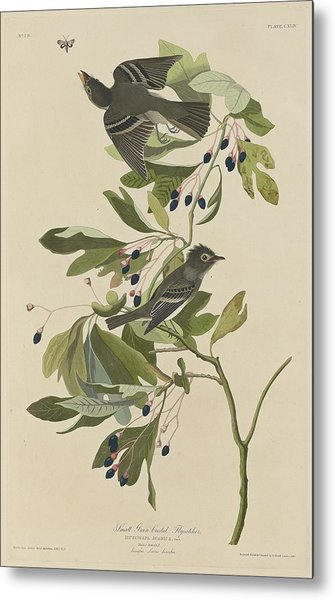 Small Green-crested Flycatcher Metal Print