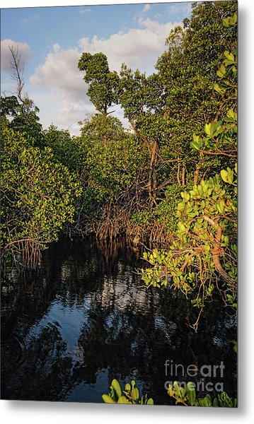 Small Waterway In Vitolo Preserve, Hutchinson Isl  -29151 Metal Print
