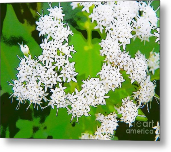 Small White Flowers Metal Print