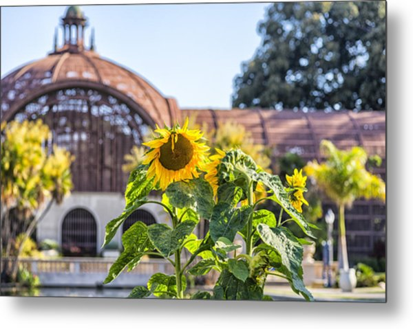 Sunflower Smile Metal Print