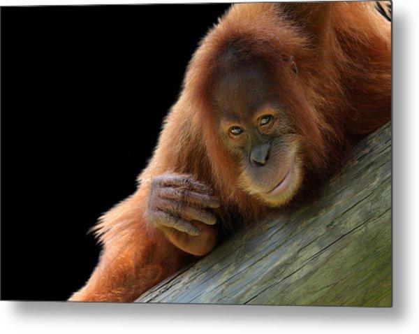 Cute Young Orangutan Metal Print