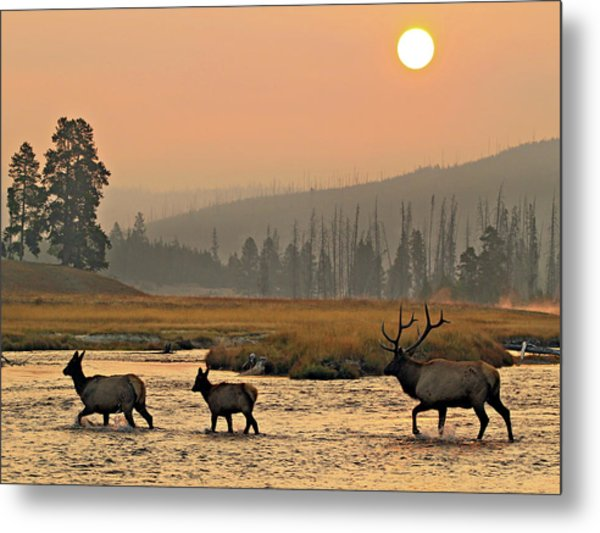 Smokey Elk Crossing Metal Print