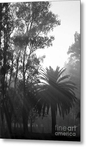 Smoky Morning Trees Metal Print